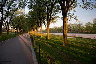 Trees along the Lincoln Memorial Reflecting Pool in early morning sun.
